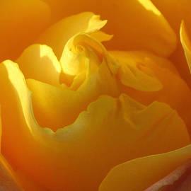 Cedona Holly - Falling Into Yellow