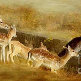 Linsey Williams - Fallow Deer Running