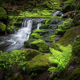 Bill Wakeley - Falls Brook 2016