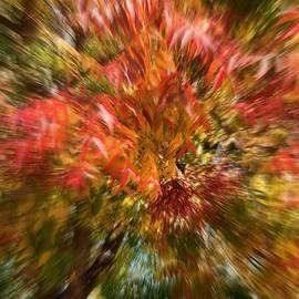 YT Photo - Fall
