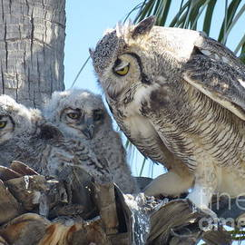Selma Glunn - Family of Owls
