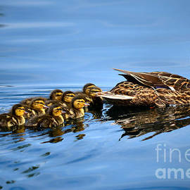 Deb Halloran - Family Swim