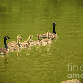 Claudia M Photography - Family swimming lessons