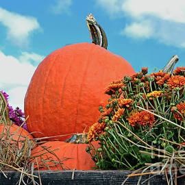 Regina Geoghan - Farm Cart Autumn Display