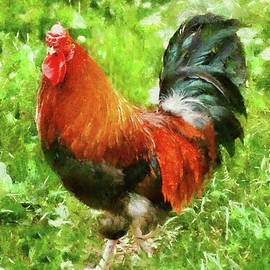 Mike Savad - Farm - Chicken - The Rooster