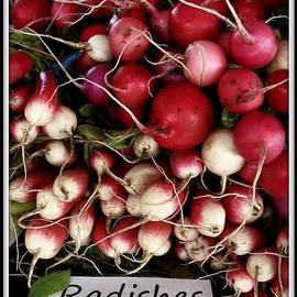 Farm Fresh Radishes