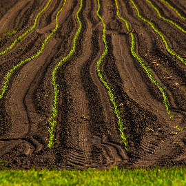 Karol Livote - Farming Lines