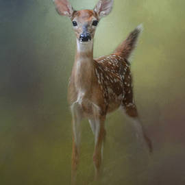 Jai Johnson - Fawn In The Forest
