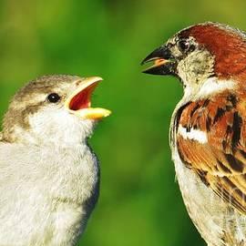 Judy Via-Wolff - Feeding Baby Sparrows 2