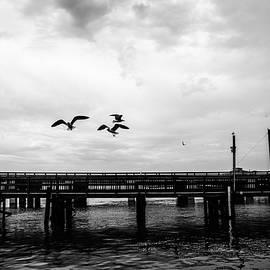 Scott Pellegrin - Feeding Gulls