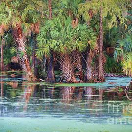Liesl Walsh - Fellsmere Cypress Swamp