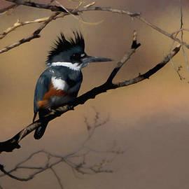 Ernie Echols - Female Belted Kingfisher