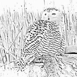 Marcia Lee Jones - Female Snow Owl