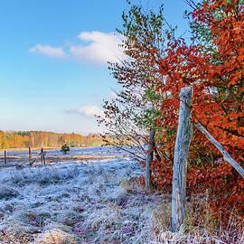 Dmytro Korol - Fenced autumn