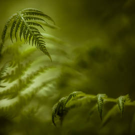 Chris Bordeleau - Fern Encounter