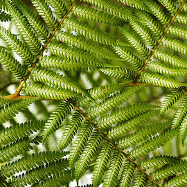 Fern leaves - Les Cunliffe