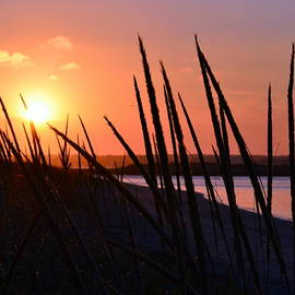 Colleen Phaedra - Ferry Beach
