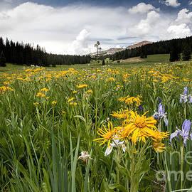 Jim Garrison - Field of Flowers