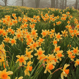 Karol  Livote - Field of Spring