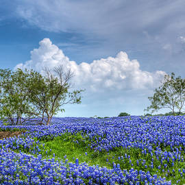 David and Carol Kelly - Field of Texas Bluebonnets