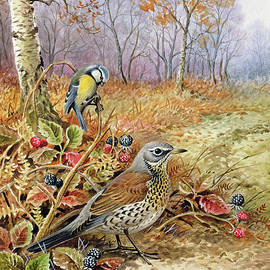 Fieldfare and Blue Tit - Carl Donner
