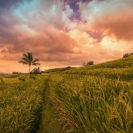 Kumar  Annamalai - Fields Of Endeavour