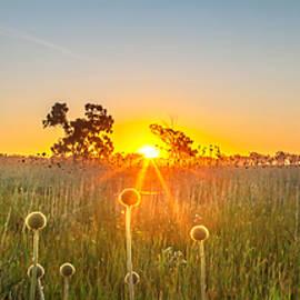 Fields Of Gold Panorama - Az Jackson