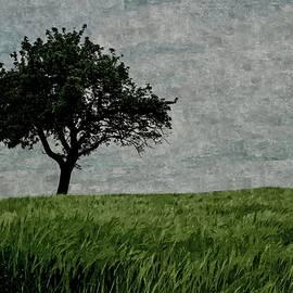 David Dehner - Fields of Green Skies of White