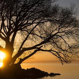 Georgia Mizuleva - Fiery Sunrise - Like a Golden Portal to Another World