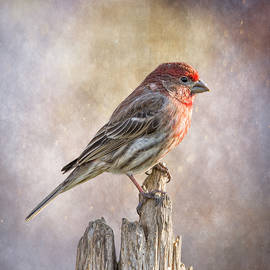 Bill Tiepelman - Finch Posted On Top