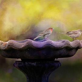 Jai Johnson - Finches On The Bird Bath
