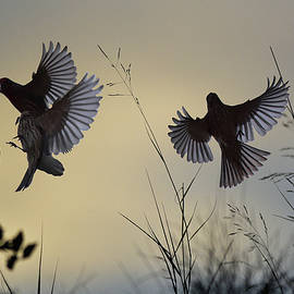 Linda Brody - Finches Silhouette with Leaves 6