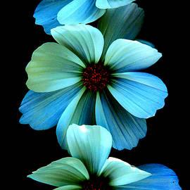 Steve McKinzie - Fire Flowers