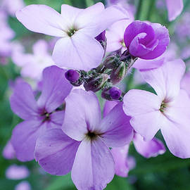 Kevin Felts - Fireweed