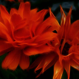 Cindy Wright - Firey Red Orange Flowers Abstract