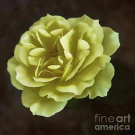 Janice Rae Pariza - First Rose