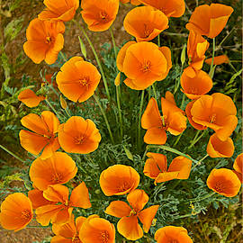 Barbara Zahno - First Signs of Spring in the Desert