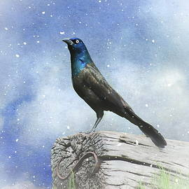 Andrea Kollo - First Snow and Common Grackle