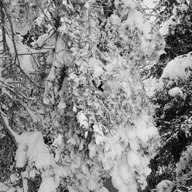 Kathleen Struckle - First Snowfall