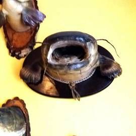 Heinz Rainer - Fish Wels Catfish freshwaterfish