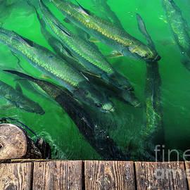 Ksenia VanderHoff - Fishing Spot