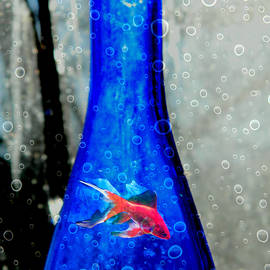 Kathy Barney - Fishy Bottle