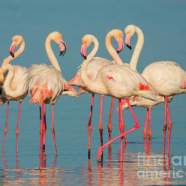 Inge Johnsson - Five Flamingos