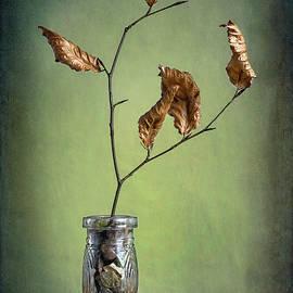 Stephen Morris - Five Leaves