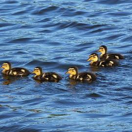 Francie Davis - Five Little Ducklings
