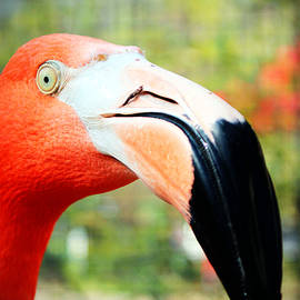 Cynthia Guinn - Flamingo Face