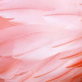Cynthia Guinn - Flamingo Feathers