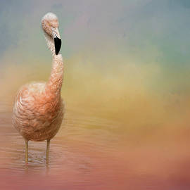 Jai Johnson - Flamingo Friday Bird Art