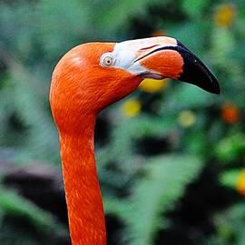 John Hughes - Flamingo