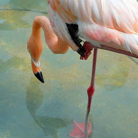 Mafalda Cento - Flamingo Pond